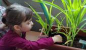 Комнатные растения в нашем уголке природы